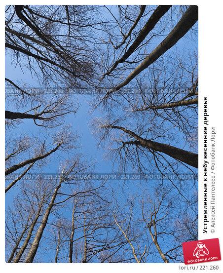 Устремленные к небу весенние деревья, фото № 221260, снято 10 марта 2008 г. (c) Алексей Пантелеев / Фотобанк Лори