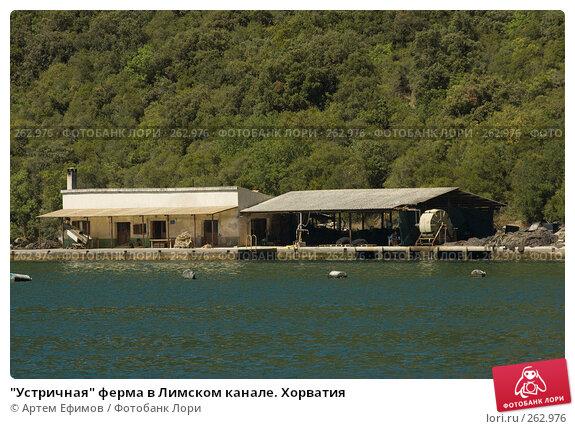 """""""Устричная"""" ферма в Лимском канале. Хорватия, фото № 262976, снято 16 июля 2007 г. (c) Артем Ефимов / Фотобанк Лори"""