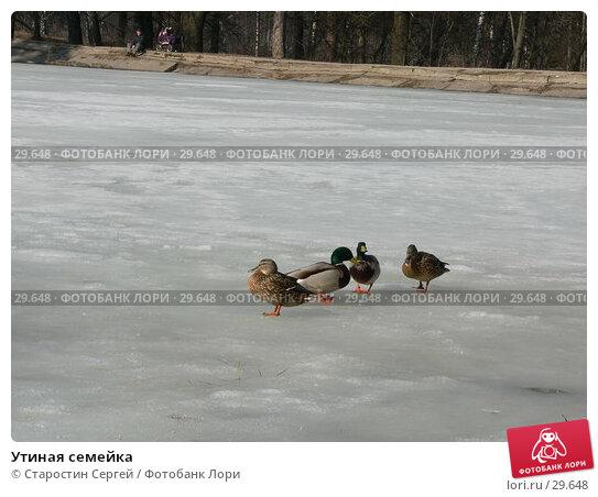 Утиная семейка, фото № 29648, снято 19 марта 2007 г. (c) Старостин Сергей / Фотобанк Лори