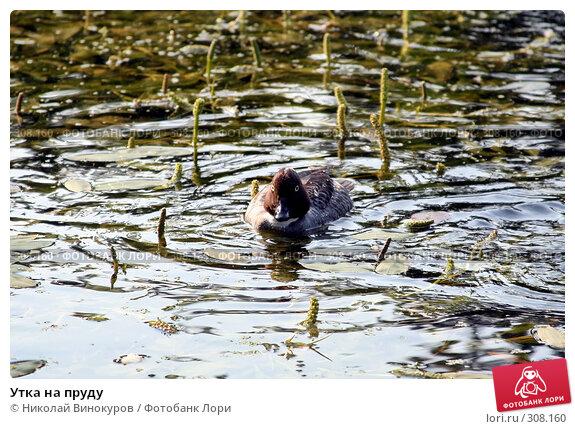 Утка на пруду, эксклюзивное фото № 308160, снято 23 марта 2017 г. (c) Николай Винокуров / Фотобанк Лори