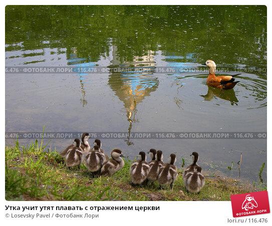 Утка учит утят плавать с отражением церкви, фото № 116476, снято 14 июня 2004 г. (c) Losevsky Pavel / Фотобанк Лори