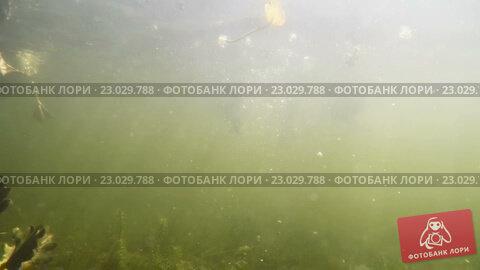 Купить «Утки едят хлеб в воде, видео из-под воды», видеоролик № 23029788, снято 23 апреля 2009 г. (c) Куликов Константин / Фотобанк Лори