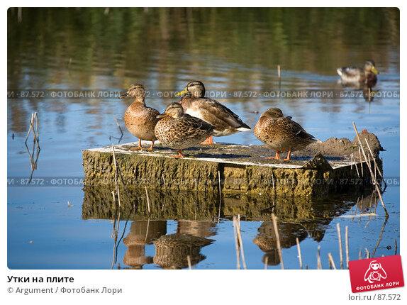 Утки на плите, фото № 87572, снято 20 сентября 2007 г. (c) Argument / Фотобанк Лори