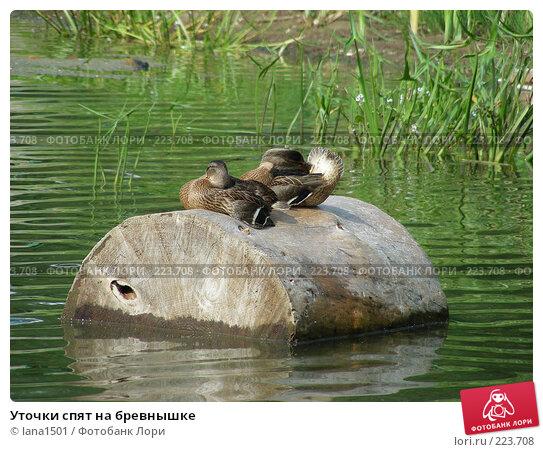 Уточки спят на бревнышке, эксклюзивное фото № 223708, снято 15 июля 2007 г. (c) lana1501 / Фотобанк Лори
