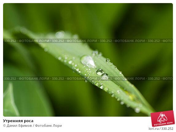 Утренняя роса, фото № 330252, снято 24 мая 2008 г. (c) Данил Ефимов / Фотобанк Лори