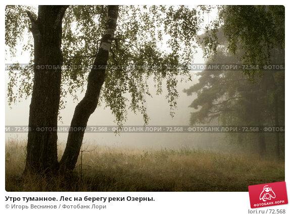 Утро туманное. Лес на берегу реки Озерны., фото № 72568, снято 29 июля 2007 г. (c) Игорь Веснинов / Фотобанк Лори