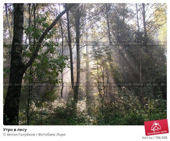 Утро в лесу, фото № 106608, снято 23 февраля 2017 г. (c) Антон Голубков / Фотобанк Лори