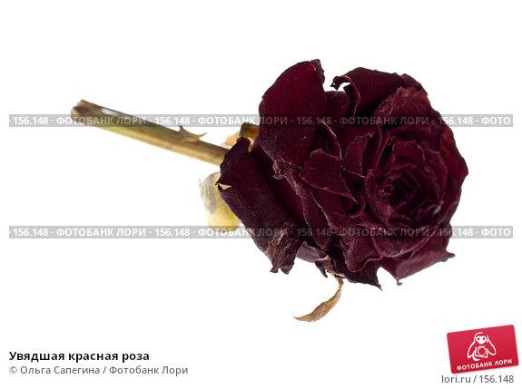 Увядшая красная роза, фото № 156148, снято 24 июля 2007 г. (c) Ольга Сапегина / Фотобанк Лори