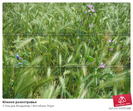 Южное разнотравье, фото № 4810688, снято 8 июня 2013 г. (c) Ельцов Владимир / Фотобанк Лори