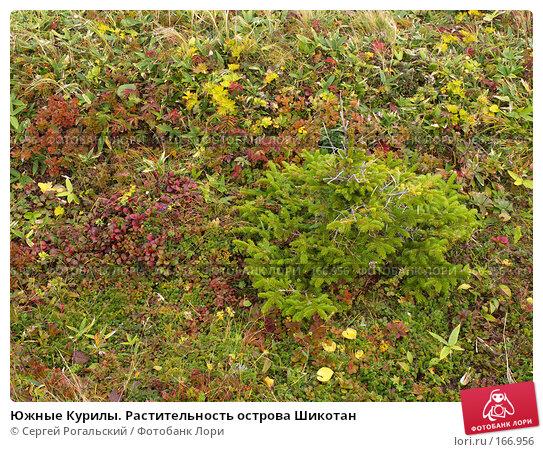 Южные Курилы. Растительность острова Шикотан, фото № 166956, снято 27 марта 2017 г. (c) Сергей Рогальский / Фотобанк Лори