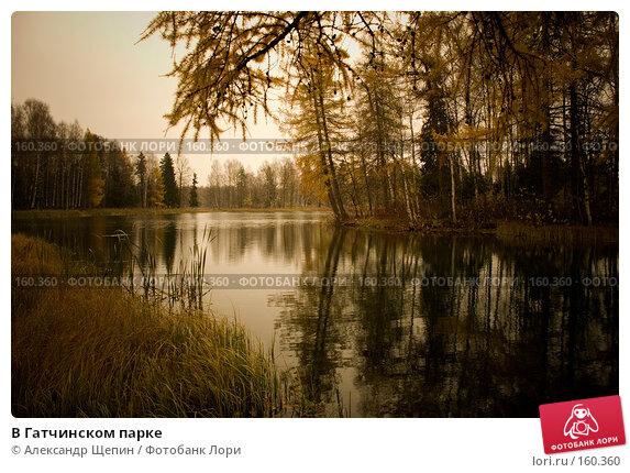 Купить «В Гатчинском парке», эксклюзивное фото № 160360, снято 28 октября 2007 г. (c) Александр Щепин / Фотобанк Лори