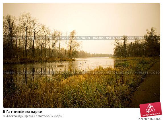 В Гатчинском парке, эксклюзивное фото № 160364, снято 28 октября 2007 г. (c) Александр Щепин / Фотобанк Лори
