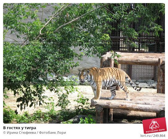 Купить «В гостях у тигра», фото № 249864, снято 14 июля 2007 г. (c) Ирина Стюфеева / Фотобанк Лори