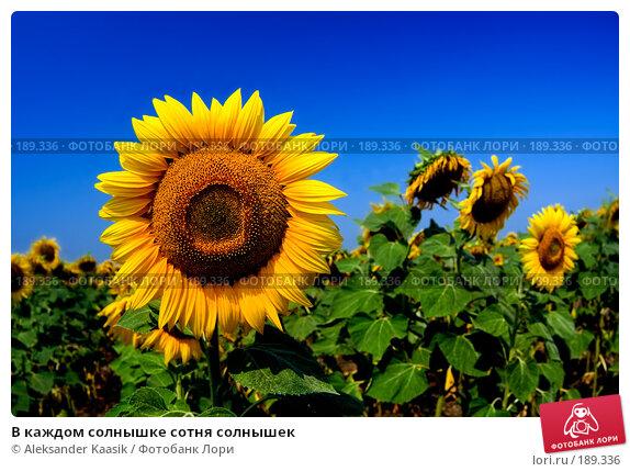 В каждом солнышке сотня солнышек, фото № 189336, снято 24 июля 2017 г. (c) Aleksander Kaasik / Фотобанк Лори