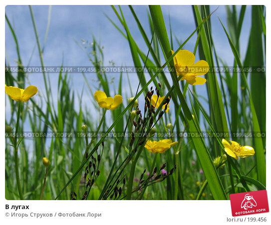 В лугах, фото № 199456, снято 21 мая 2005 г. (c) Игорь Струков / Фотобанк Лори