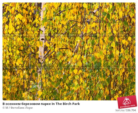 В осеннем березовом парке In The Birch Park, фото № 336704, снято 25 апреля 2017 г. (c) Михаил / Фотобанк Лори