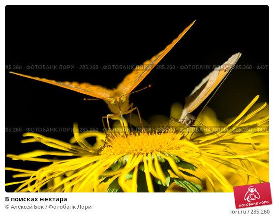 В поисках нектара, эксклюзивное фото № 285260, снято 18 июля 2007 г. (c) Алексей Бок / Фотобанк Лори
