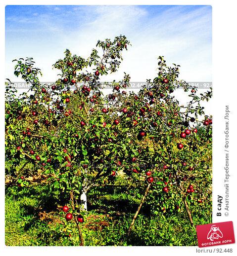 В саду, фото № 92448, снято 23 сентября 2007 г. (c) Анатолий Теребенин / Фотобанк Лори