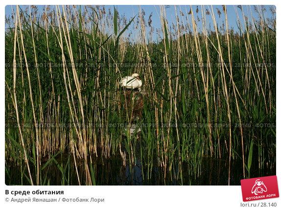 В среде обитания, фото № 28140, снято 18 июня 2006 г. (c) Андрей Явнашан / Фотобанк Лори