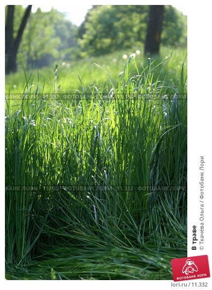 Купить «В траве», фото № 11332, снято 4 июня 2006 г. (c) Ткачёва Ольга / Фотобанк Лори