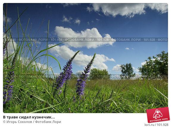 В траве сидел кузнечик..., фото № 101928, снято 22 июля 2017 г. (c) Игорь Соколов / Фотобанк Лори