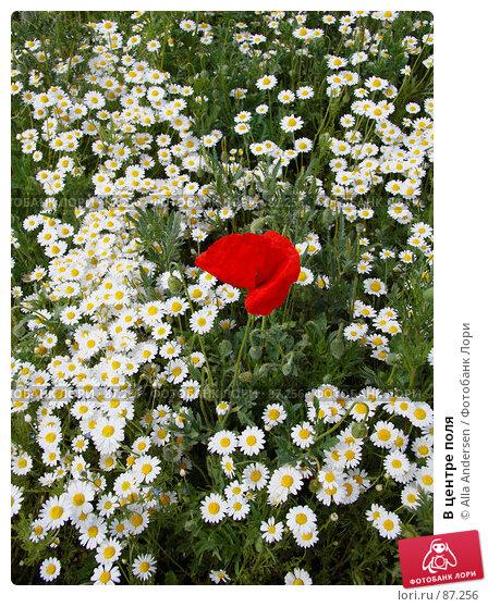 В центре поля, фото № 87256, снято 19 мая 2007 г. (c) Alla Andersen / Фотобанк Лори