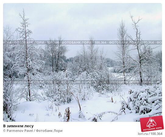 В зимнем лесу, фото № 100364, снято 15 февраля 2007 г. (c) Parmenov Pavel / Фотобанк Лори