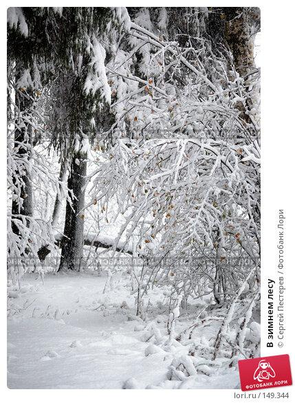 В зимнем лесу, фото № 149344, снято 14 октября 2007 г. (c) Сергей Пестерев / Фотобанк Лори