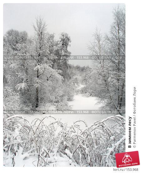 В зимнем лесу, фото № 153968, снято 15 февраля 2007 г. (c) Parmenov Pavel / Фотобанк Лори