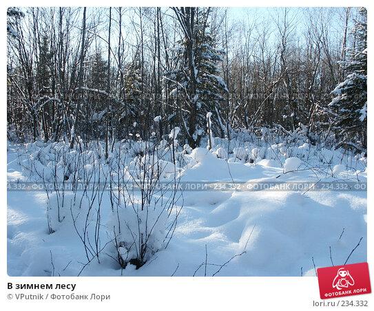 В зимнем лесу, фото № 234332, снято 12 февраля 2007 г. (c) VPutnik / Фотобанк Лори