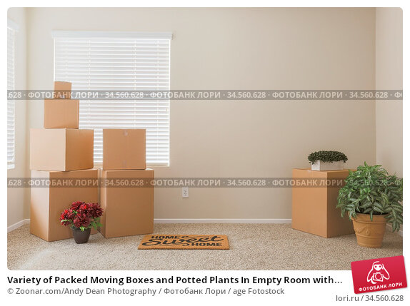 Variety of Packed Moving Boxes and Potted Plants In Empty Room with... Стоковое фото, фотограф Zoonar.com/Andy Dean Photography / age Fotostock / Фотобанк Лори