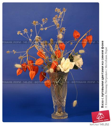 Ваза с луговыми цветами на синем фоне, фото № 145252, снято 11 декабря 2007 г. (c) Коннов Леонид Петрович / Фотобанк Лори
