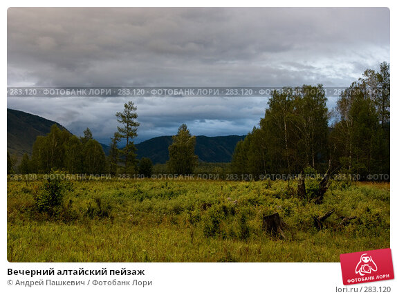 Вечерний алтайский пейзаж, фото № 283120, снято 23 мая 2017 г. (c) Андрей Пашкевич / Фотобанк Лори