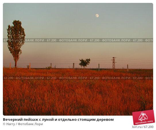 Купить «Вечерний пейзаж с луной и отдельно стоящим деревом», фото № 67200, снято 30 июня 2004 г. (c) Harry / Фотобанк Лори