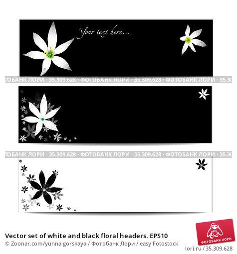 Vector set of white and black floral headers. EPS10. Стоковое фото, фотограф Zoonar.com/yunna gorskaya / easy Fotostock / Фотобанк Лори