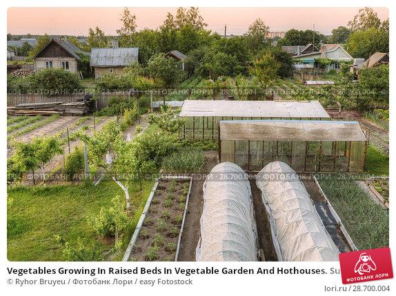 Купить «Vegetables Growing In Raised Beds In Vegetable Garden And Hothouses. Summer Season.», фото № 28700004, снято 31 мая 2016 г. (c) easy Fotostock / Фотобанк Лори