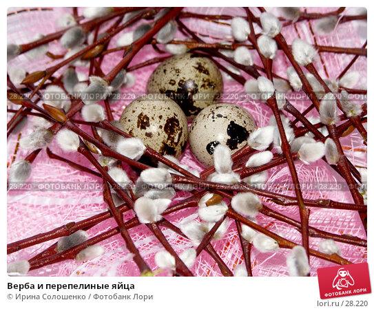 Верба и перепелиные яйца, фото № 28220, снято 26 марта 2007 г. (c) Ирина Солошенко / Фотобанк Лори