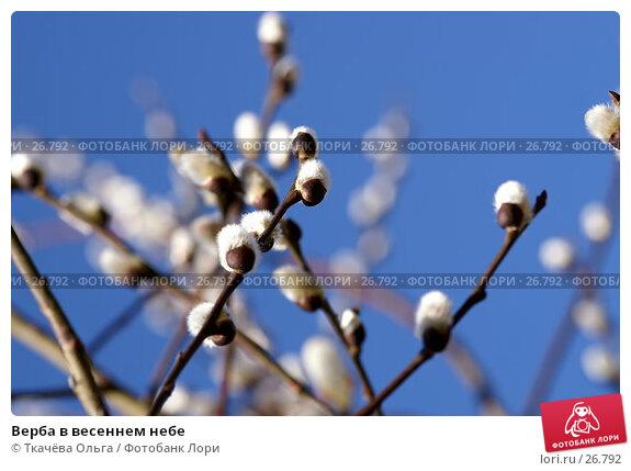 Верба в весеннем небе, фото № 26792, снято 25 марта 2007 г. (c) Ткачёва Ольга / Фотобанк Лори