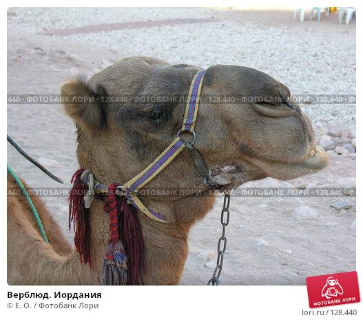 Верблюд. Иордания, фото № 128440, снято 25 ноября 2007 г. (c) Екатерина Овсянникова / Фотобанк Лори