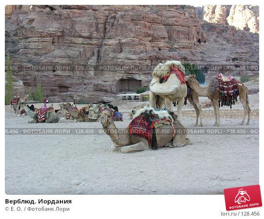 Верблюд. Иордания, фото № 128456, снято 25 ноября 2007 г. (c) Екатерина Овсянникова / Фотобанк Лори