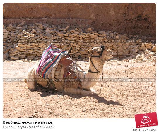 Верблюд лежит на песке, фото № 254884, снято 4 марта 2008 г. (c) Ален Лагута / Фотобанк Лори