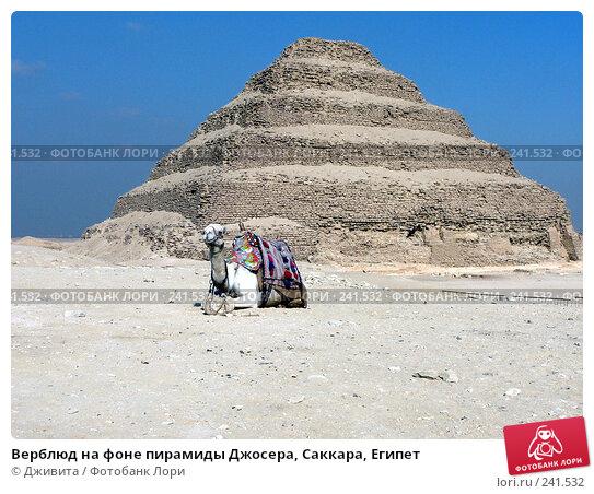 Верблюд на фоне пирамиды Джосера, Саккара, Египет, фото № 241532, снято 8 января 2008 г. (c) Дживита / Фотобанк Лори