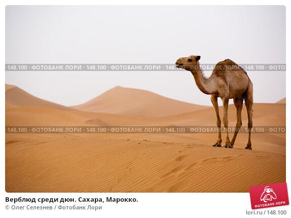Верблюд среди дюн. Сахара, Марокко., фото № 148100, снято 19 августа 2007 г. (c) Олег Селезнев / Фотобанк Лори