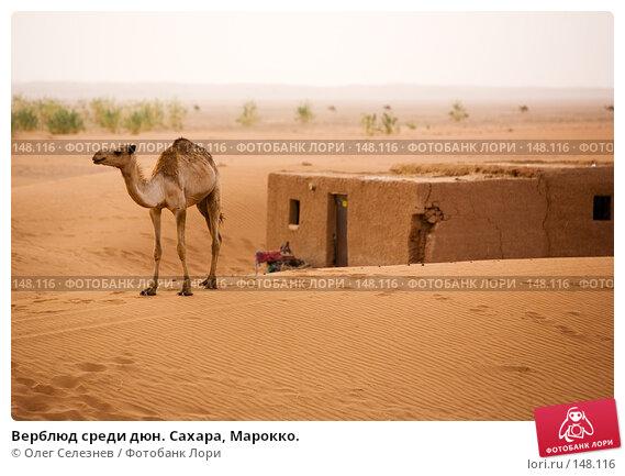 Верблюд среди дюн. Сахара, Марокко., фото № 148116, снято 19 августа 2007 г. (c) Олег Селезнев / Фотобанк Лори