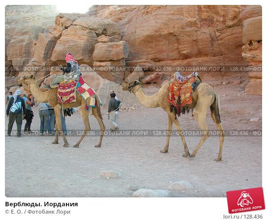Верблюды. Иордания, фото № 128436, снято 25 ноября 2007 г. (c) Екатерина Овсянникова / Фотобанк Лори