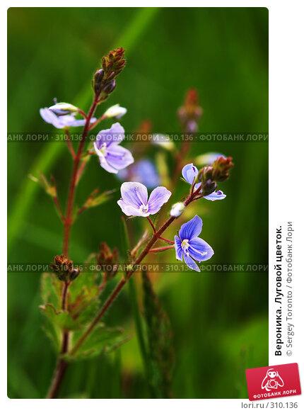 Купить «Вероника. Луговой цветок.», фото № 310136, снято 1 июня 2008 г. (c) Sergey Toronto / Фотобанк Лори