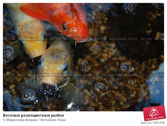 Купить «Веселые разноцветные рыбки», фото № 197276, снято 26 мая 2007 г. (c) Мирослава Безман / Фотобанк Лори