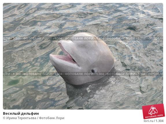 Веселый дельфин, фото № 1304, снято 15 сентября 2005 г. (c) Ирина Терентьева / Фотобанк Лори