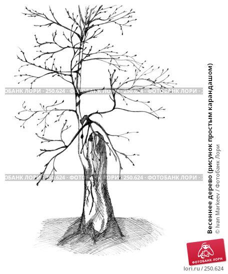 Весеннее дерево (рисунок простым карандашом), иллюстрация № 250624 (c) Василий Каргандюм / Фотобанк Лори