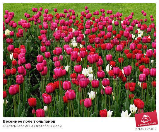 Весеннее поле тюльпанов, фото № 26812, снято 24 марта 2017 г. (c) Артемьева Анна / Фотобанк Лори